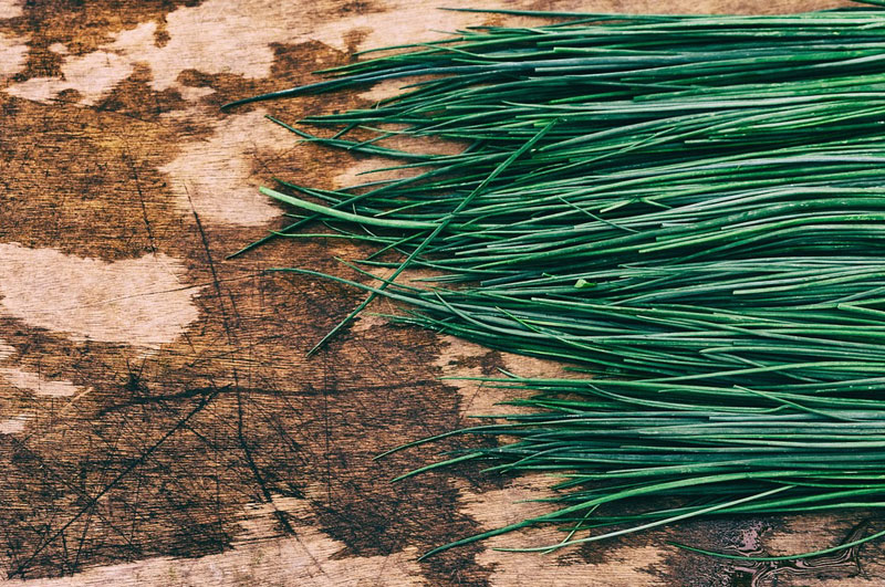 Food Wiki : What is the Chive?
