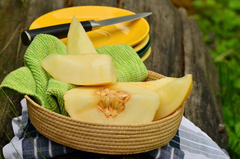 Cantaloupe Gerd – Eating cantaloupe may bring a number of health benefits.