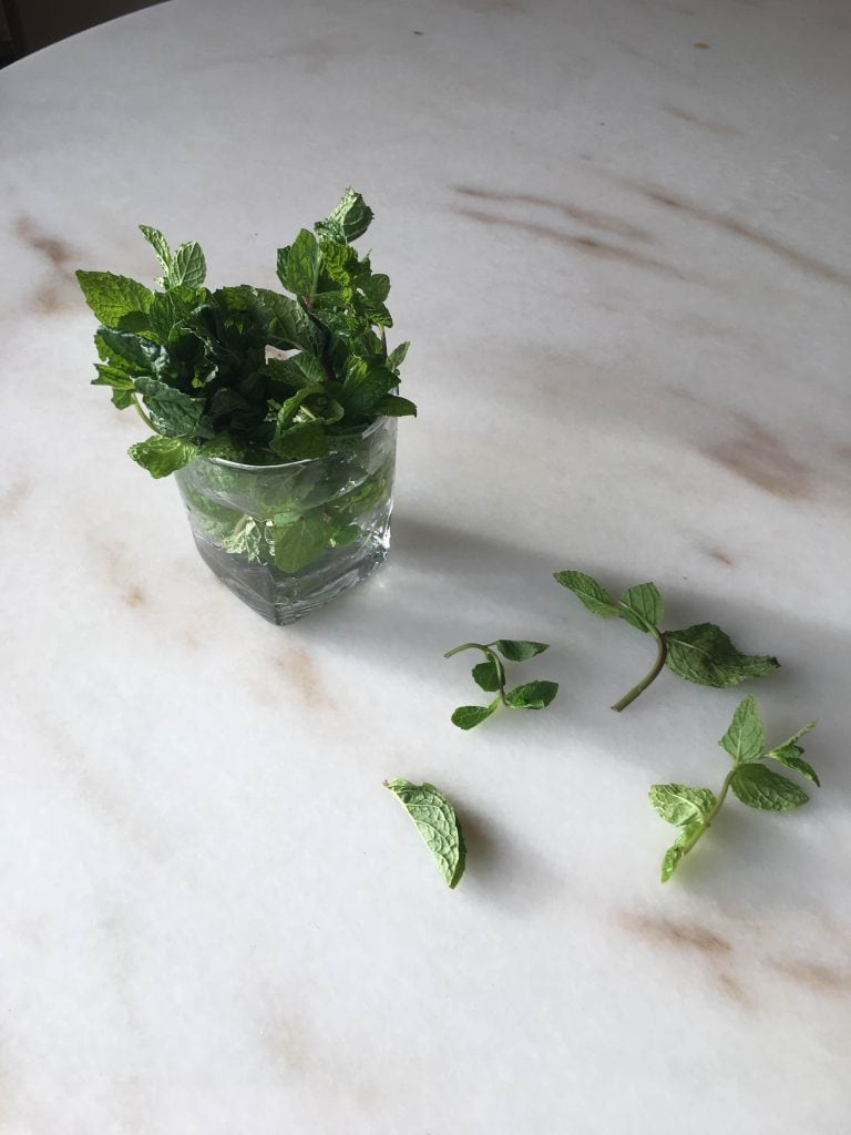 herbs in glass of water for storage